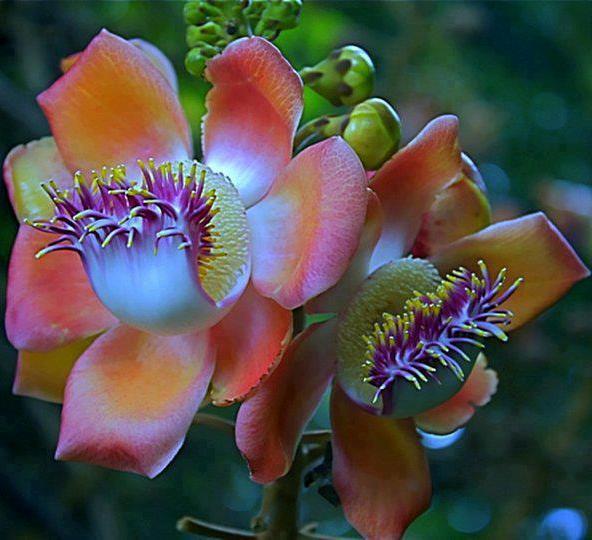 çiçek rresimleri