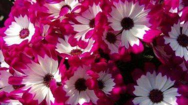 Rengarenk Çiçek Resimleri
