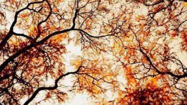 Doğa ve Sonbahar Resimleri