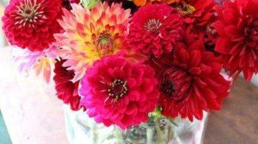 Vazodaki Çiçek Resimleri
