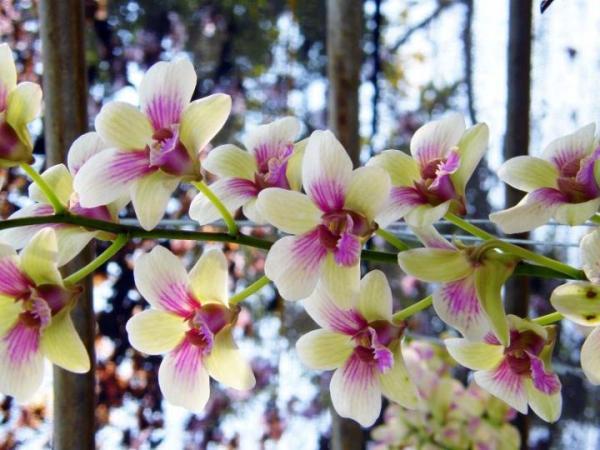 muhteşem çiçek resimleri