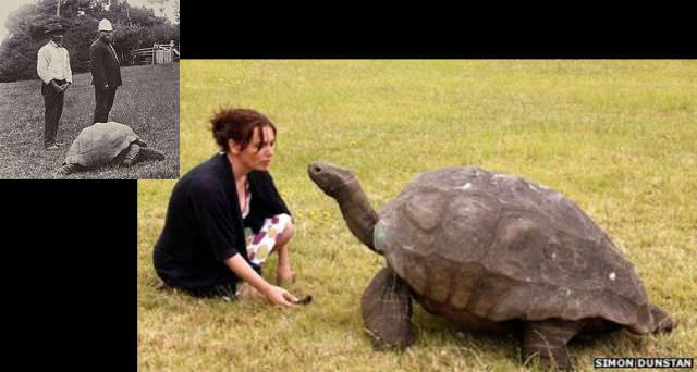 1902 ve 2005 yıllarında aynı kaplumbağa