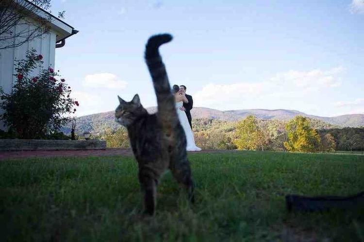 Bu kedi de nereden çıktı