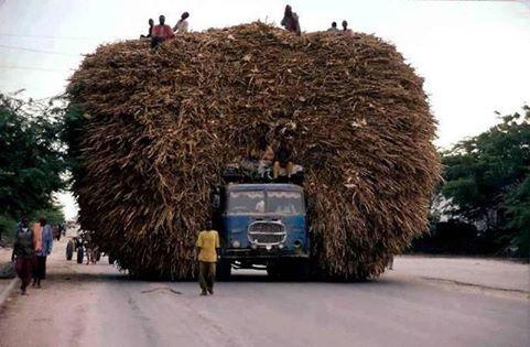 Taşımacılık yöntemleri görenleri şaşırtıyor