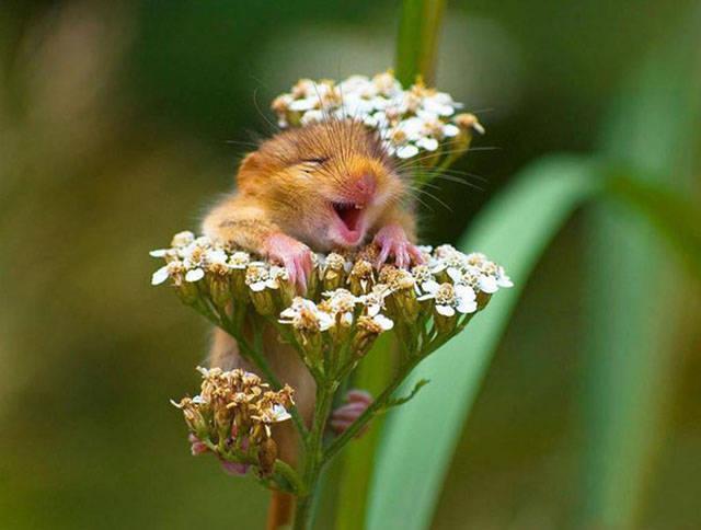 Çiçeklerin arasında minik bir sincap yavrusu