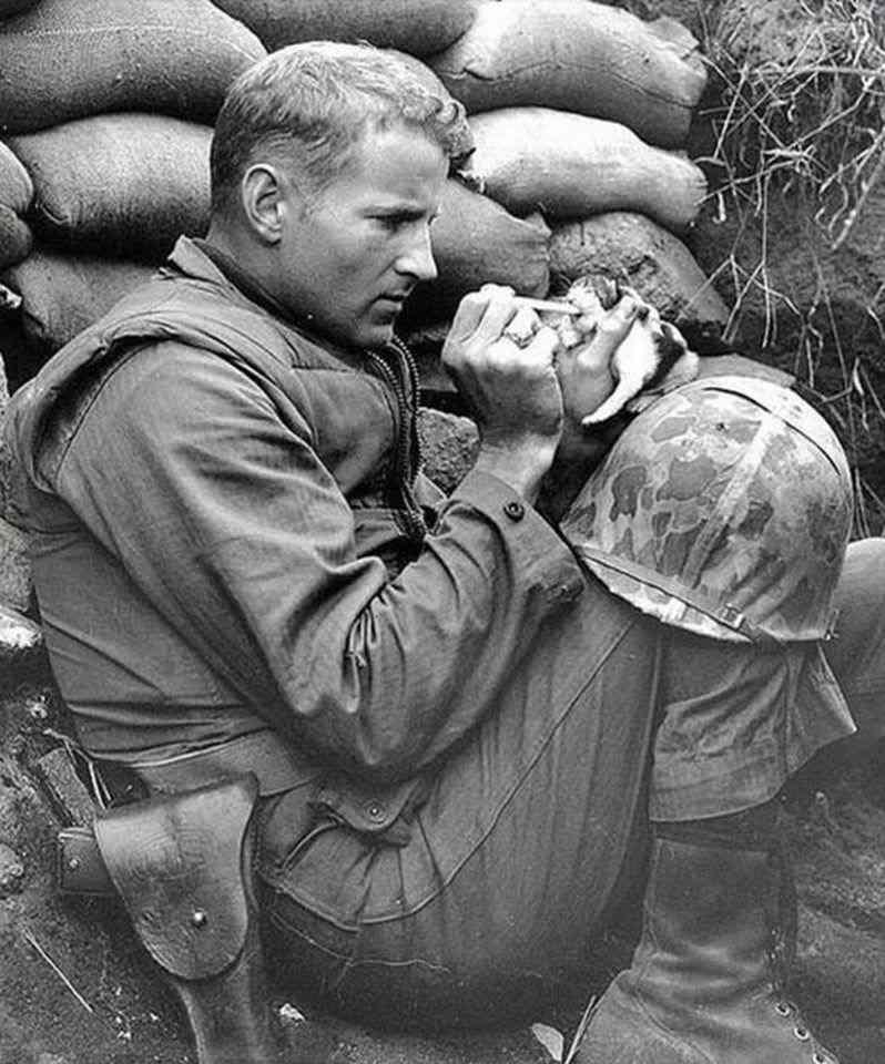 11 Kore savaşı sırasında iki haftalık bir kediye bakan Çavuş Frank Praytor