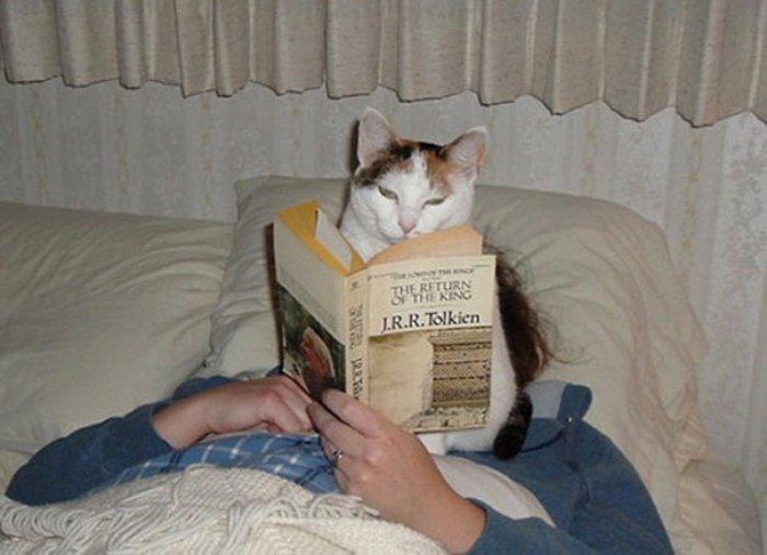 Kitap okuyan sevimli kedi