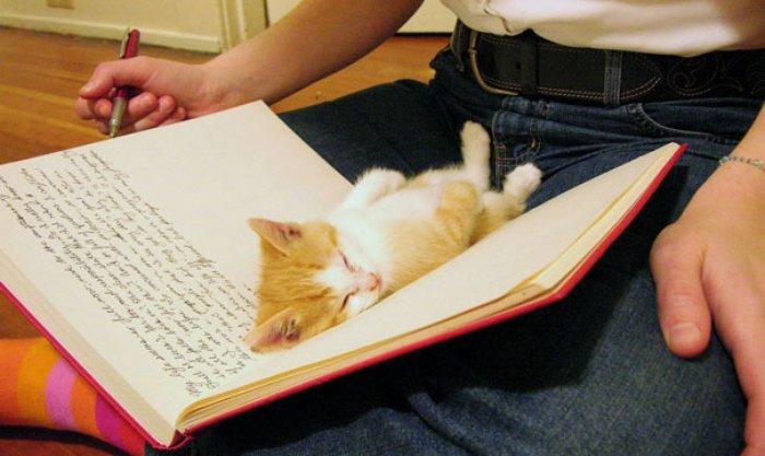 Yazı yazmaya engel olan sevimli kedi