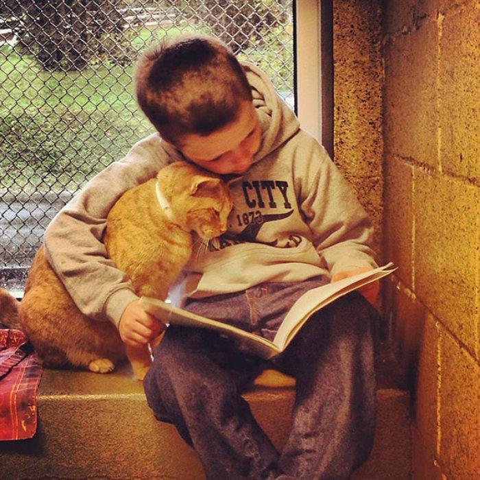 14 Kedisine kitap okuyan çocuk